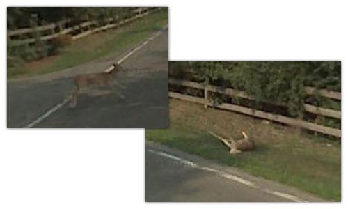 Google Street View : Bambi