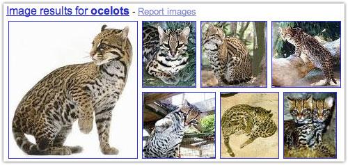 Google : Images dans les SERPS