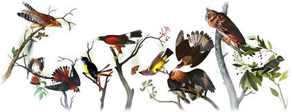 Google : Doodle pour John James Audubon