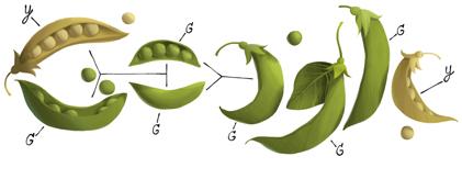 Google : Doodle de Gregor Mendel